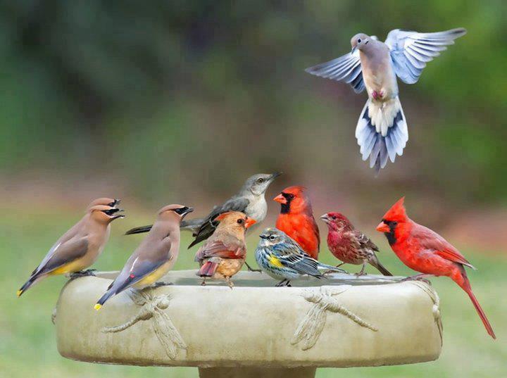 oiseaux dans Liens